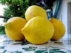 Limoncino1